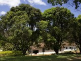 Beautiful Trees - Hotel Fazenda Caco de Cuia - Itabirito