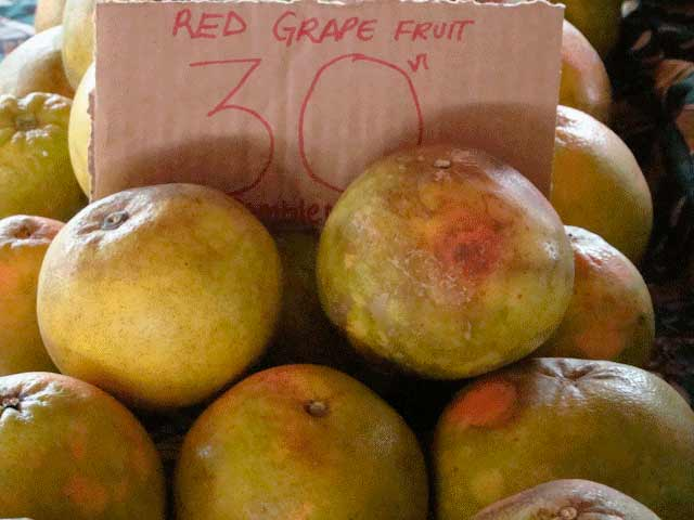 Red grape fruit
