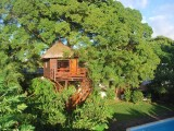 Treehouse | Tree Lodge | Mauritius