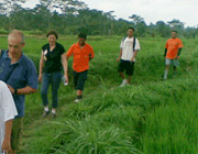 Rice Paddy Walks - Tours and Activities, Puri Darma Agung, Ubud, Bali - Indonesia