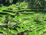 Tegalalang | The Puspa Ubud