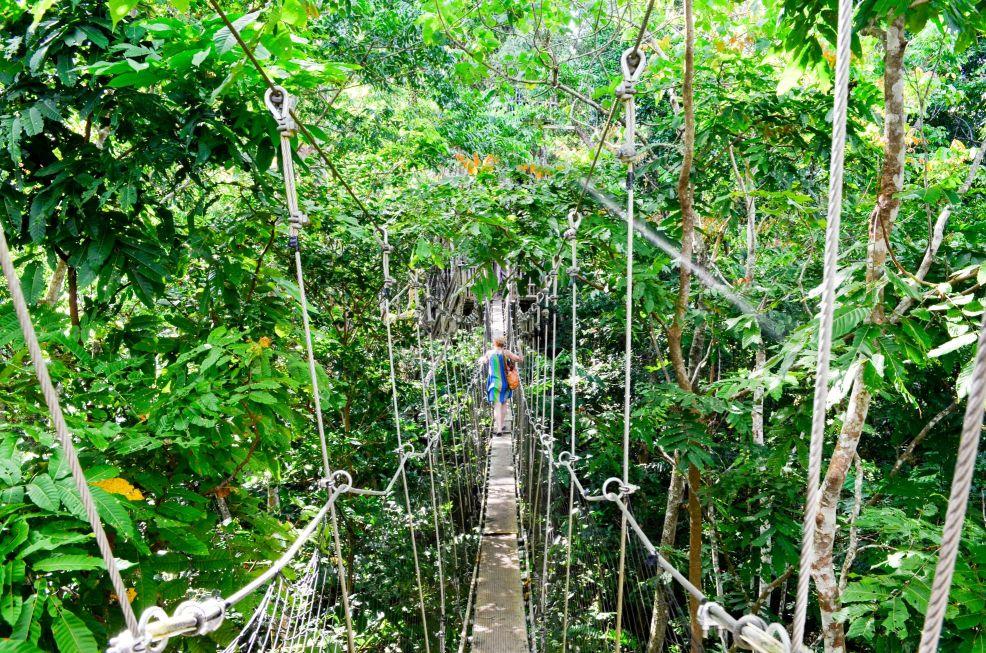 Falealupo Canopy Walkway Child Vaimoana Falealupo Canopy Walkway Bridge Vaimoana ... & Wider Savaii Island Activities