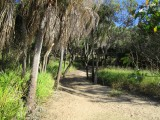 Beach Path Agnes Water 1770 Southern Great Barrier Reef Holiday Accommodation
