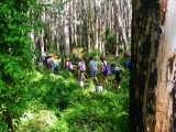 Reedy Creek Reserve Agnes Water 1770 Southern Great Barrier Reef Holiday Accommodation