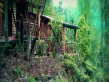 Hut | Tathagata Farm | Darjeeling, India