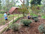 Working | Tathagata Farm | Darjeeling, India