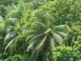 Palm Trees | Les Cottages de Bellevue | Vanuatu