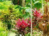 Tropical Flowers | Les Cottages de Bellevue Ecolodge | Port Vila, Vanuatu
