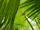 Palms | Les Cottages de Bellevue | Vanuatu