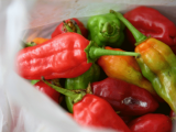 Small Peppers | Les Cottages de Bellevue | Vanuatu