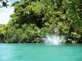 Diving the Blue Hole | Les Cottages de Bellevue | Vanuatu