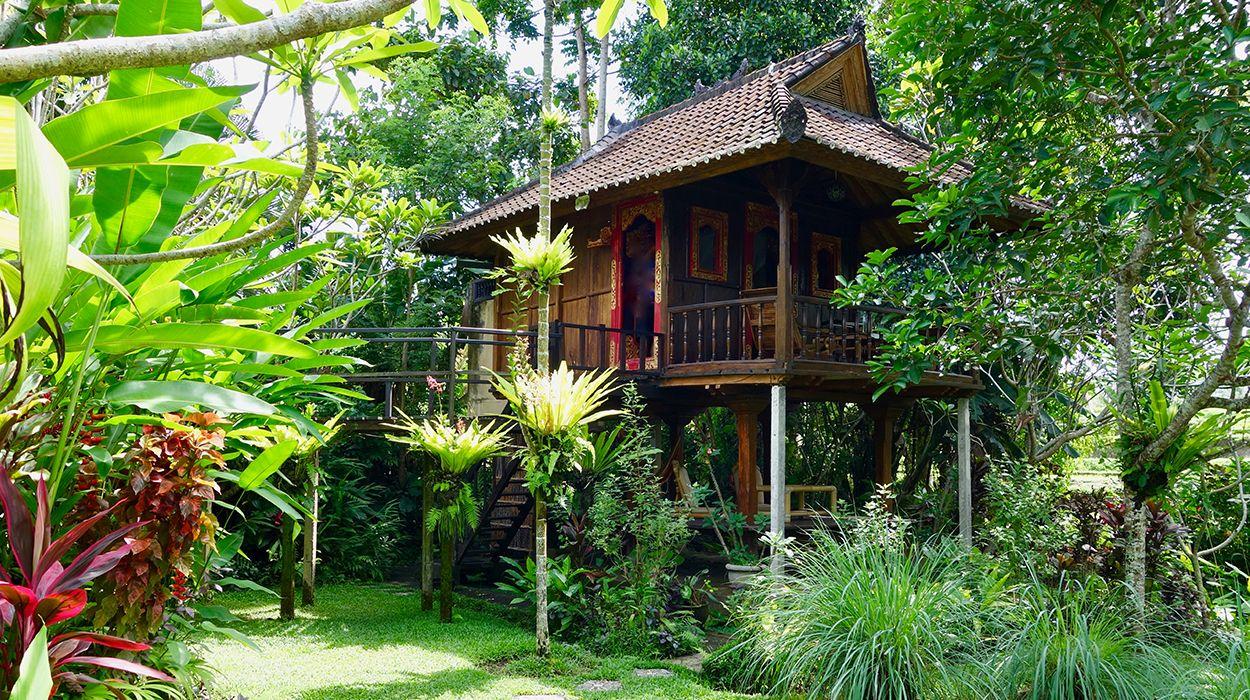 Bali Firefly Ubud Indonesia