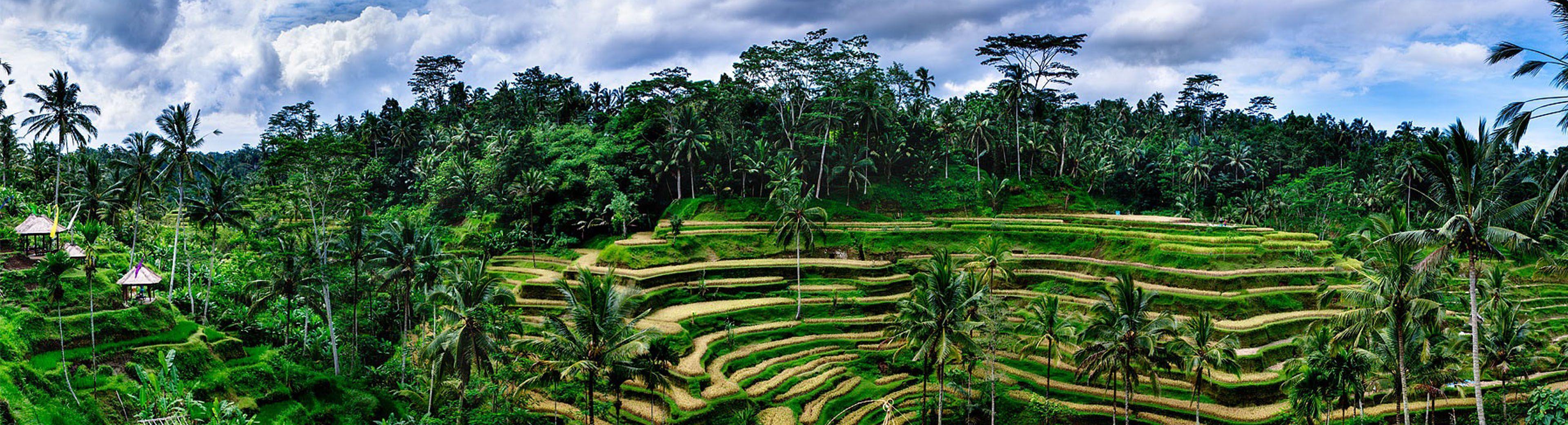4 انشطة سياحية يمكن القيام بها في مدرجات أرز تيجالالانج