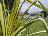 Gardens | Blue Bay Resort & Restaurant | Port Vila, Vanuatu