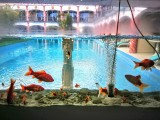 aquarium with live fish